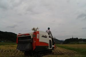 稲刈り完了