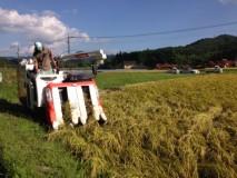 2015稲刈り開始